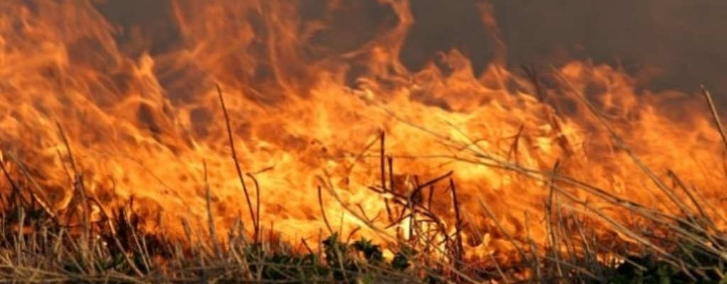 Plaga pożarów suchych traw, nieużytków.