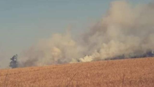 Węgorzyno. Duży pożar zboża na polach niedaleko Chwarstna